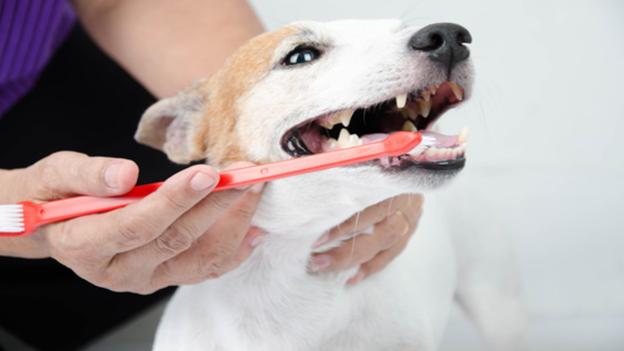 dog dental hygiene tips from leonard animal clinic in leonard texas